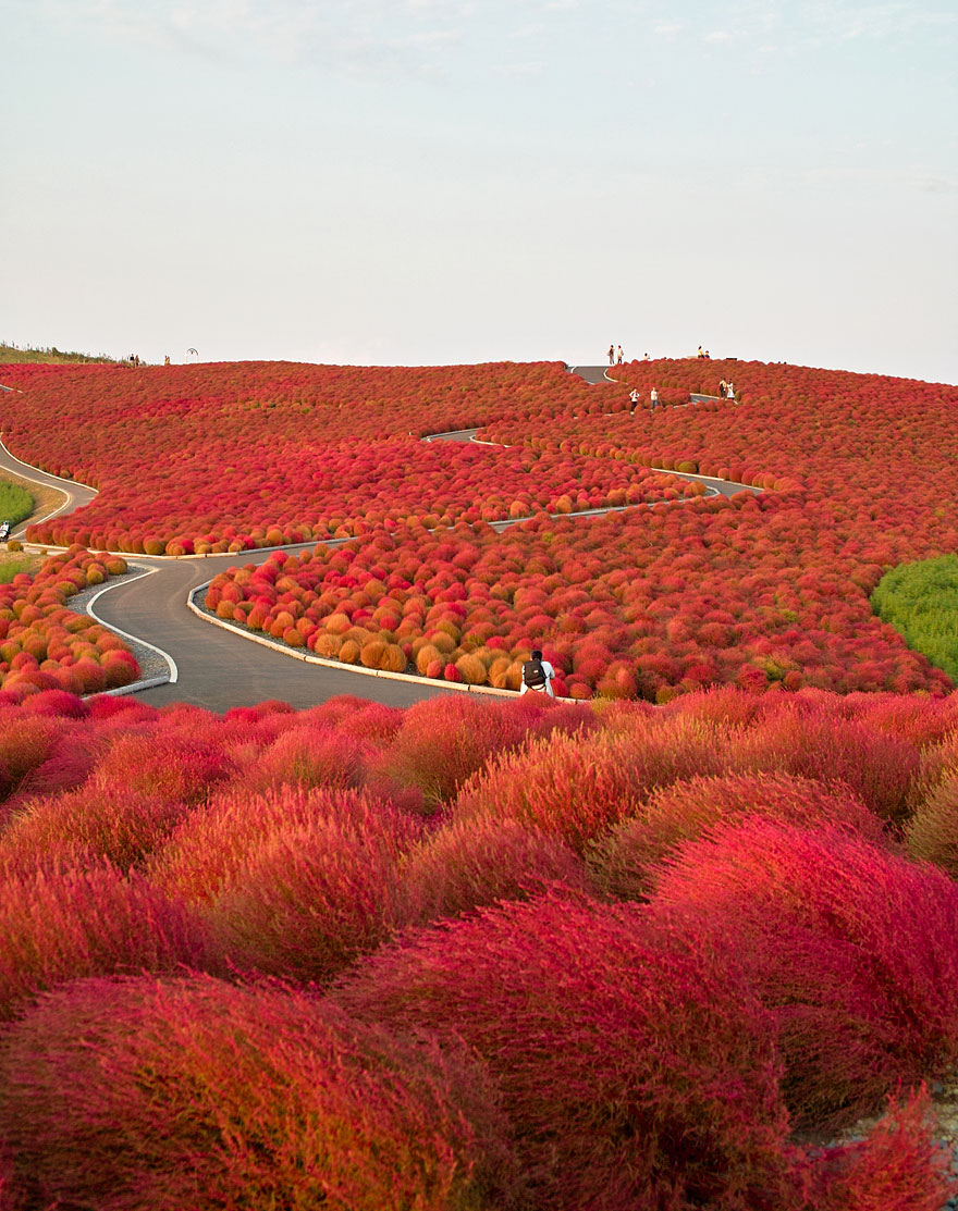 Hitashi Seaside Park, Japão