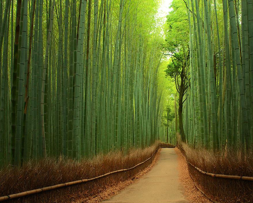 Floresta de Bambu, Japão