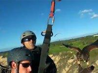 Vídeo: Levando o falcão para passear
