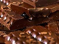 Coma chocolate