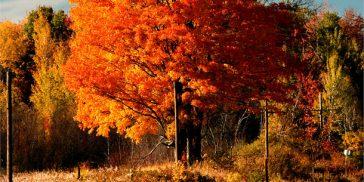Coloque em prática lições que o outono nos ensina